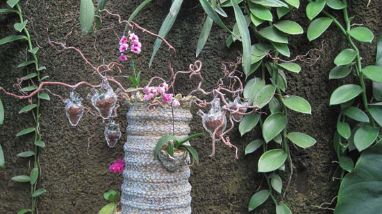 Orchid Organ Tree