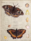 Butterfly Seed Collage - Thumb